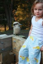 A--Friendly-Kookaburra